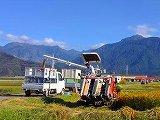 平成25年の稲刈り作業風景