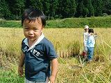 稲刈り作業の様子