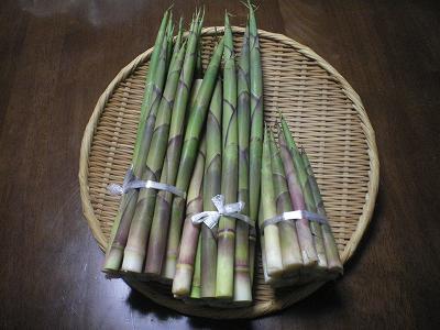 魚沼の山竹の子