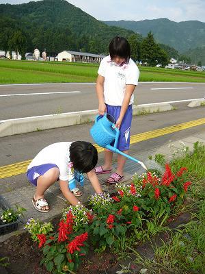 花壇の花の植え直し