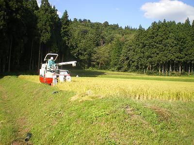 魚沼では、稲刈りが始まりました。