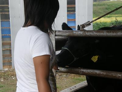 和牛の子牛