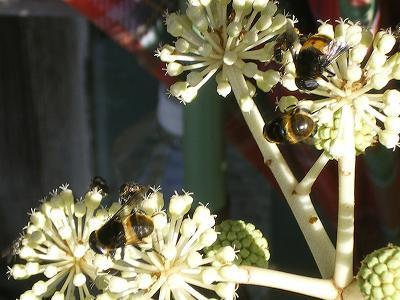 魚沼では、まだミツバチが・・・