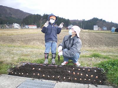 花壇の球根植え