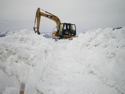 雪の下の畑