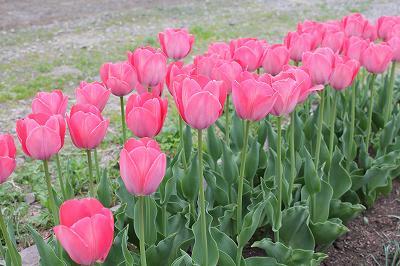 咲いた咲いた、赤色