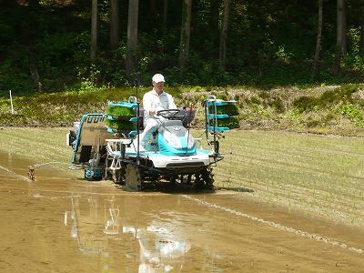 魚沼産コシヒカリの田植え