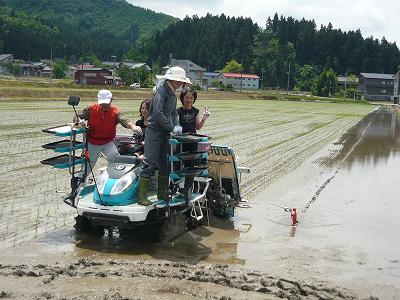 魚沼産コシヒカリ田植え体験