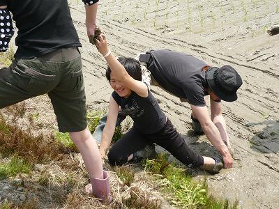 魚沼産コシヒカリの田植え体験