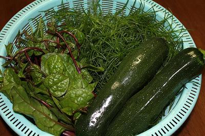 夏野菜が採れた!