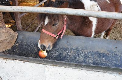 おやつはりんご