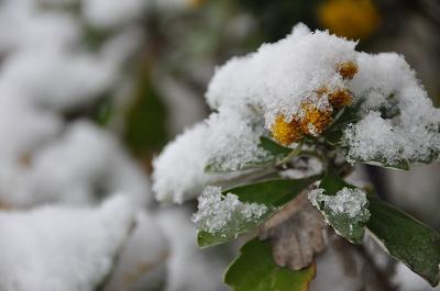 雪が降ったよ!