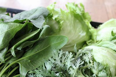 魚沼のハウス野菜