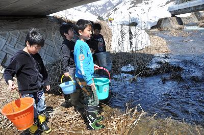 三用川でカジカの稚魚の放流