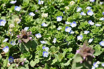農道の雑草の花