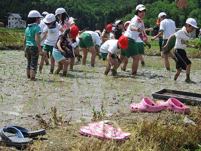 学校田の田植え
