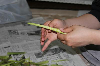 竹の子皮むき