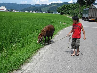 馬のお散歩