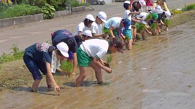 魚沼の小学校の田植え