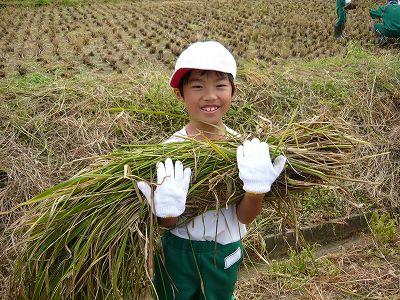 小学校の稲刈り
