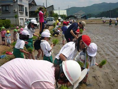 小学校の田植え
