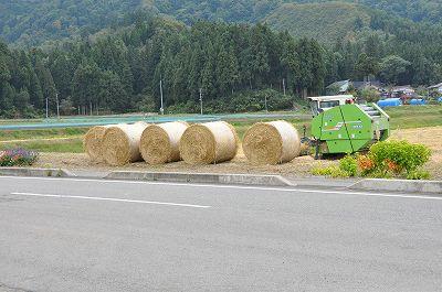 稲刈の終わった田んぼでは・・・