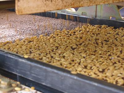 籾蒔き(4月)