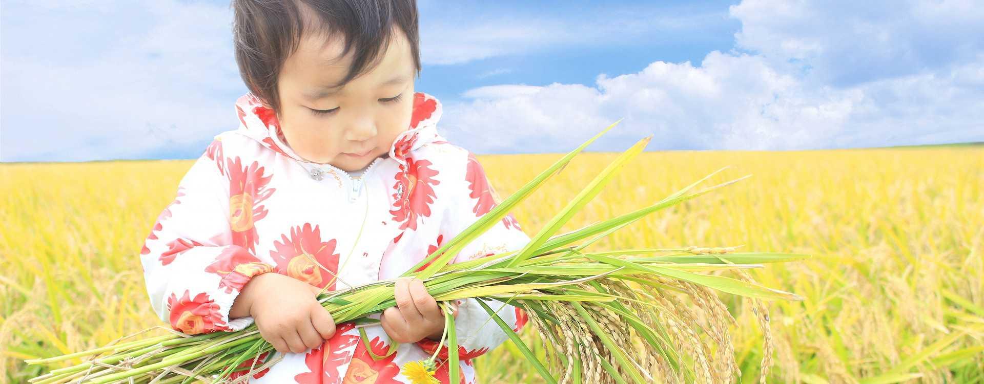みんなが安心して食べられるお米を作ります